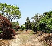 s-植木畑