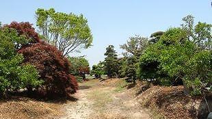 庭木イメージ